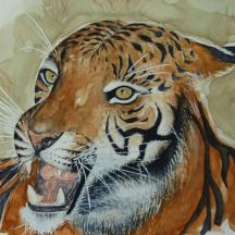 Tiger  - 30x42, Aquarelle